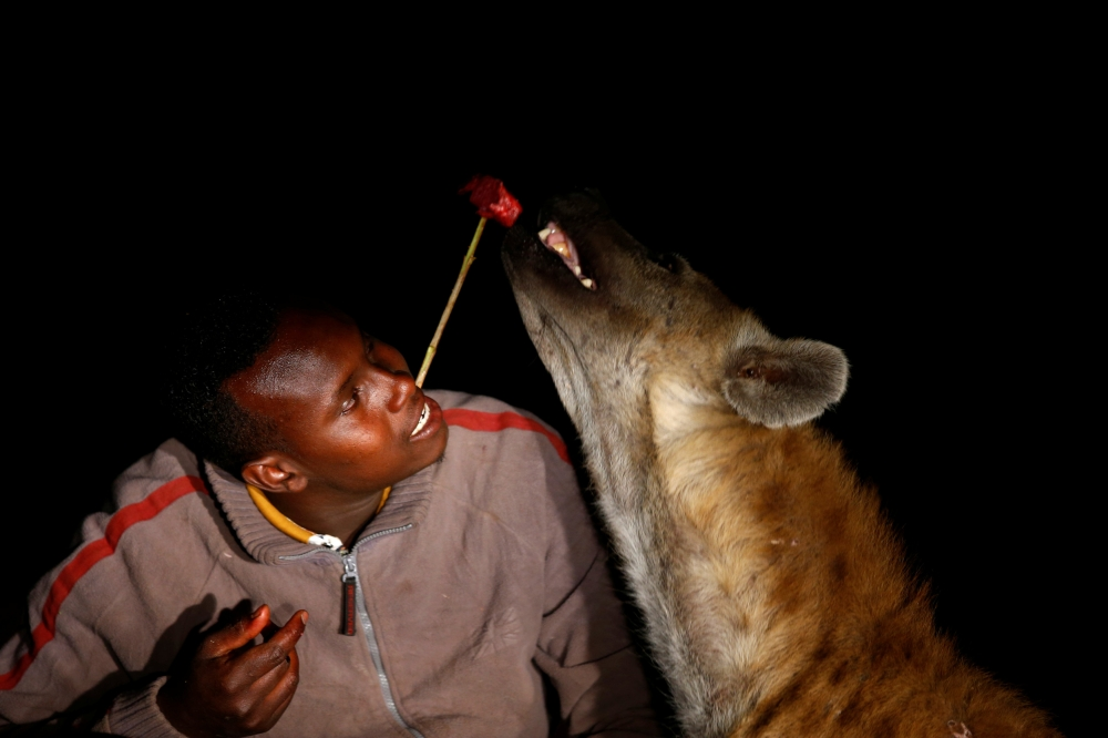 Abbas Yusuf, 23, known as Hyena Man, feeds a hyena on the outskirts of the walled city of Harar, Ethiopia. - Reuters