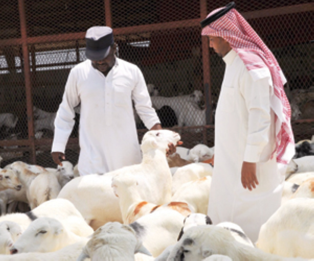 Over 2 million heads of sheep have already arrived at Jeddah Islamic Port since the beginning of Ramadan. — Courtesy photo