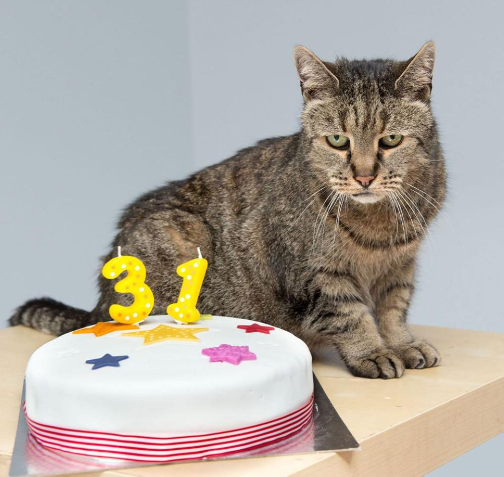 Nutmeg pictured last year at Westway Vets on his 31st birthday in Newcastle upon Tyne.