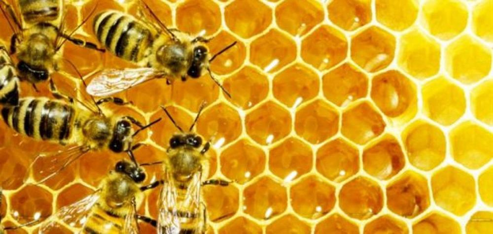 Beware of the honey trap
