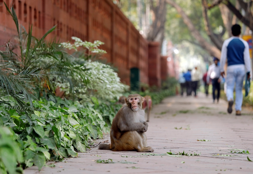 A monkey sits on a pavement outside India's Parliament building in New Delhi. — Reuters