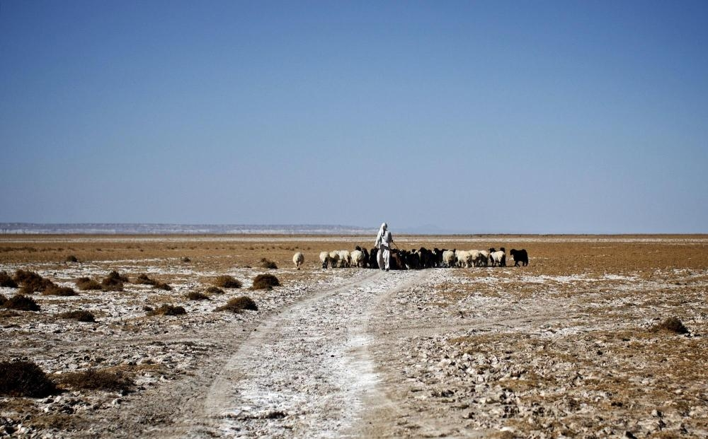 An Iranian shepherd walks his herd in the middle of Hamoon wetland near the Zabol town. — AFP