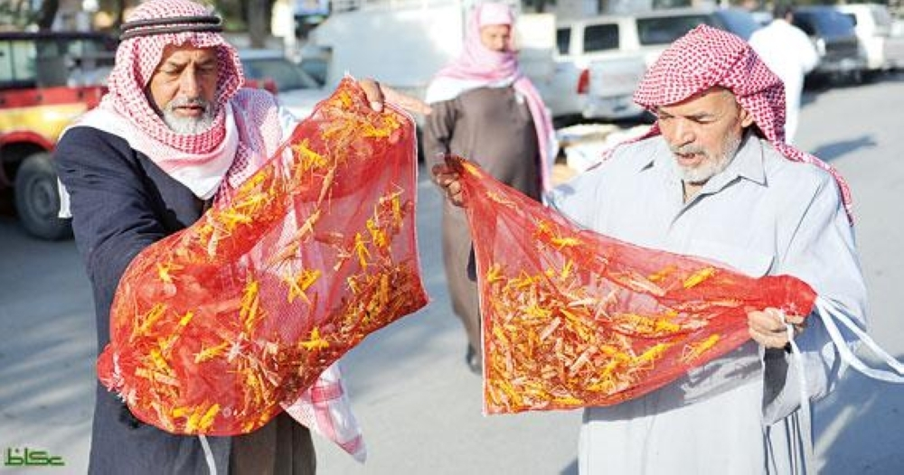 Despite a ban on eating locusts, they are sold at secret locations in Al-Ahsa.
