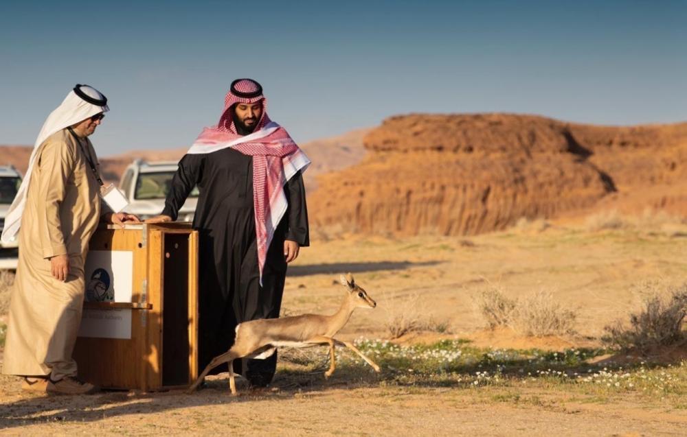 'Al Ula Vision... Saudi Arabia gift to world'