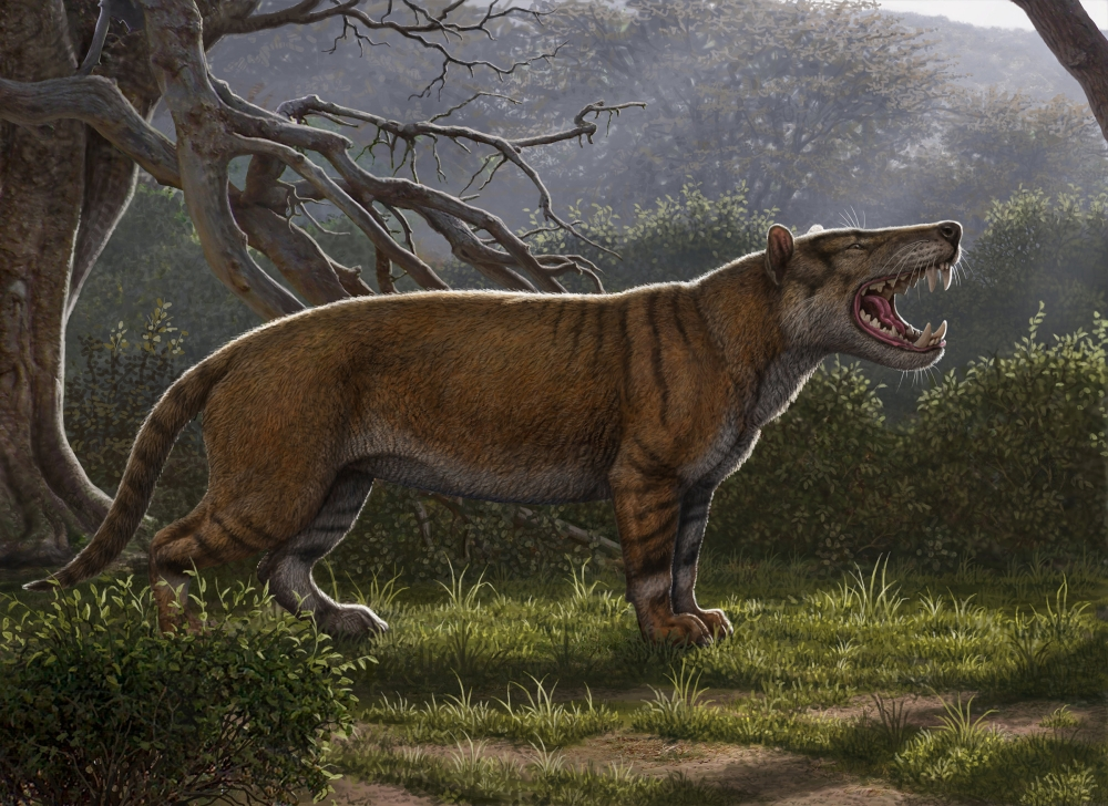 Simbakubwa kutokaafrika, a gigantic mammalian carnivore that lived 22 million years ago in Africa and was larger than a polar bear, is seen in this artist's illustration released in Athens, Ohio, US, on Thursday. — Reuters