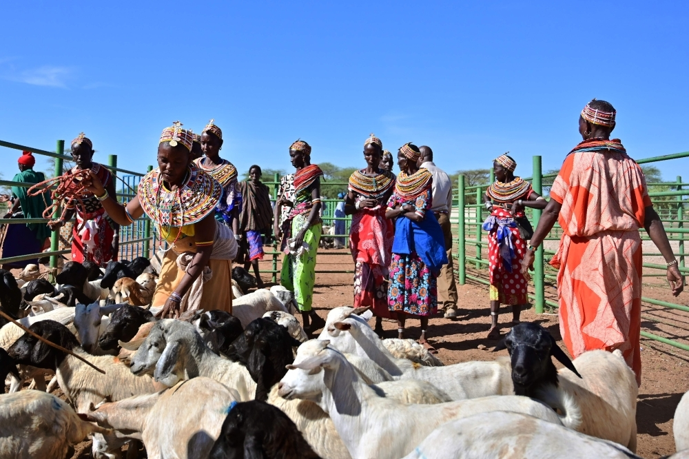 Traditional Samburu tribeswomen gather their goats to be sell at Merille livestock market, some 411 km north of Nairobi in Kenya's Marsabit county, on April 30, 2019. Nomadic livestock herders in East Africa's drylands have endured climate variability for millennia, driving their relentless search for water and pasture in some of the world's most inhospitable terrain. — AFP