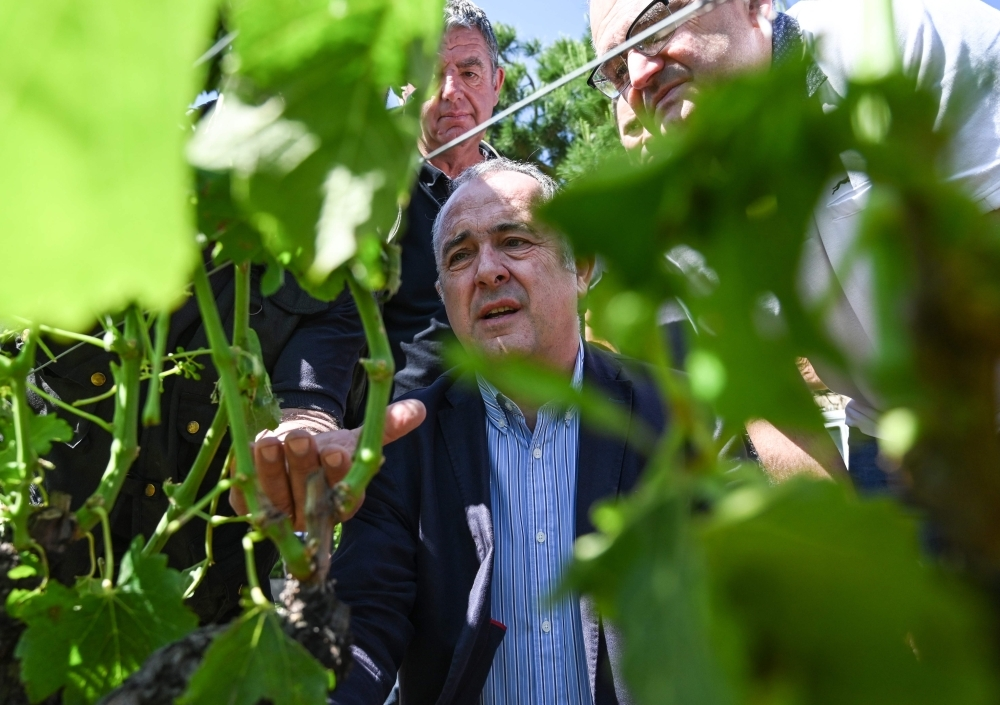 French minister of Agriculture Didier Guillaume (C) looks on a vineyard hit by hailstorm next to farmers in La Roche-de-Glun near Romans-sur-Isere, southeastern France on June, 16, 2019 after a storm that caused one death and heavy damage. — AFP
