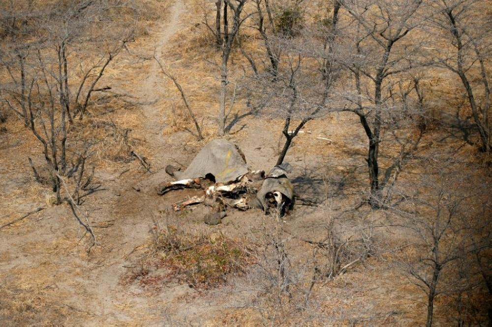 500 vultures die in Botswana after eating poisoned elephants ...