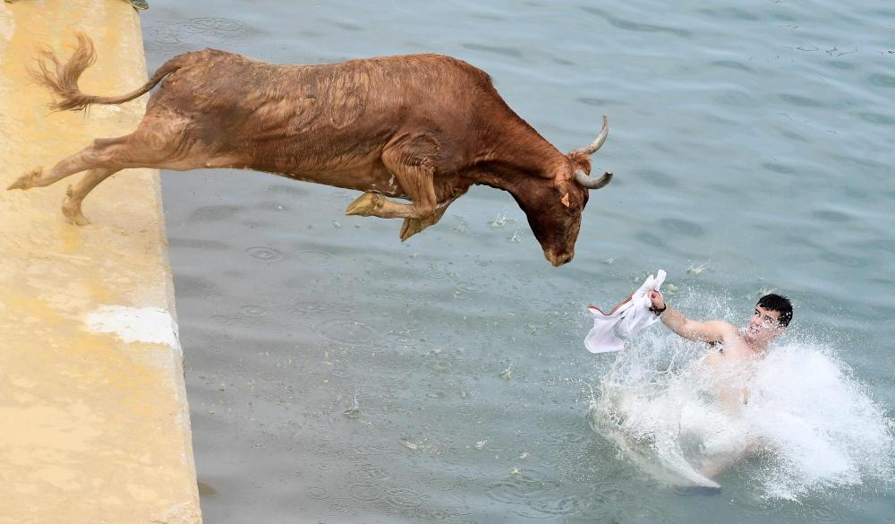 TOPSHOT - A bull jumps in the water during the traditional running of bulls