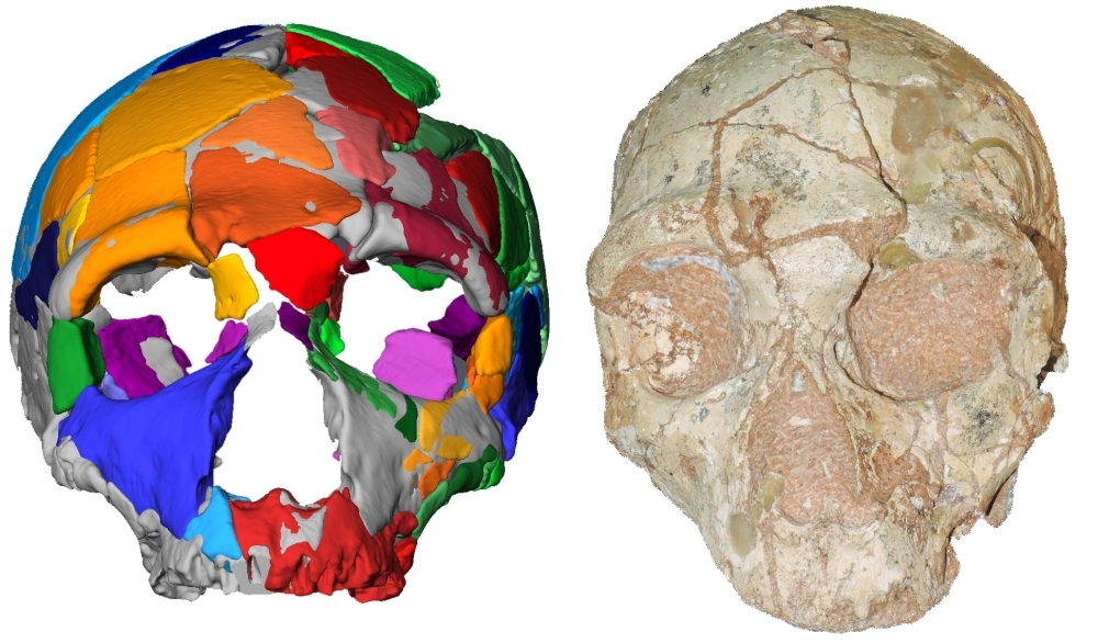 This handout picture released on July 10, 2019, by Eberhard Karls University of Tuebingen shows a reconstruction and computer model of part of a skull named Apidima 2, discovered in a Greek cave, which was determined in a study to have the characteristics of Neanderthal man. A 210,000-year-old skull has been identified as the earliest modern human remains found outside Africa, putting the clock back on mankind's arrival in Europe by more than 150,000 years, researchers said on Wednesday. — AFP