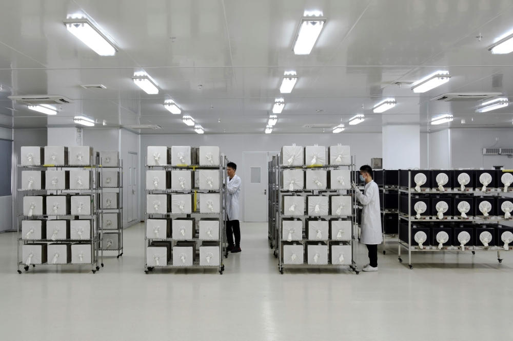 This handout photo taken on July 13, 2019 by the Guangzhou Wolbaki Biotech Company shows mass rearing of adult mosquitoes in containers at the Wolbaki company in Guangzhou in southern China's Guangdong province. — AFP
