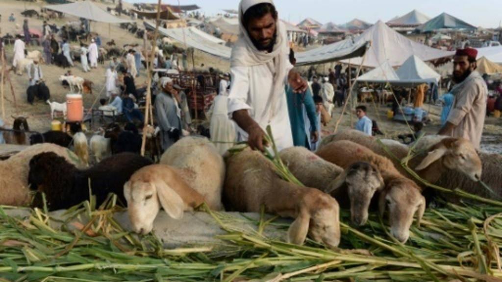 Afghans prepare for Eid, hope for peace - Saudi Gazette