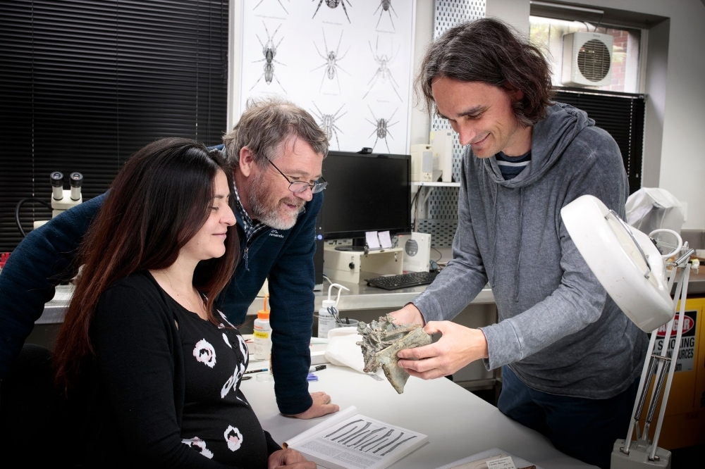 This undated handout picture received on August 14, 2019 from the Canterbury Museum shows researchers Vanesa De Pietri (L), Paul Scofield (C) and Gerald Mayr (R) with fossilised remains of crossvallia waiparensis, a species of penguin which lived off New Zealand's coast in the Paleocene era some 66-56 million years ago, at the Canterbury Museum.  -AFP