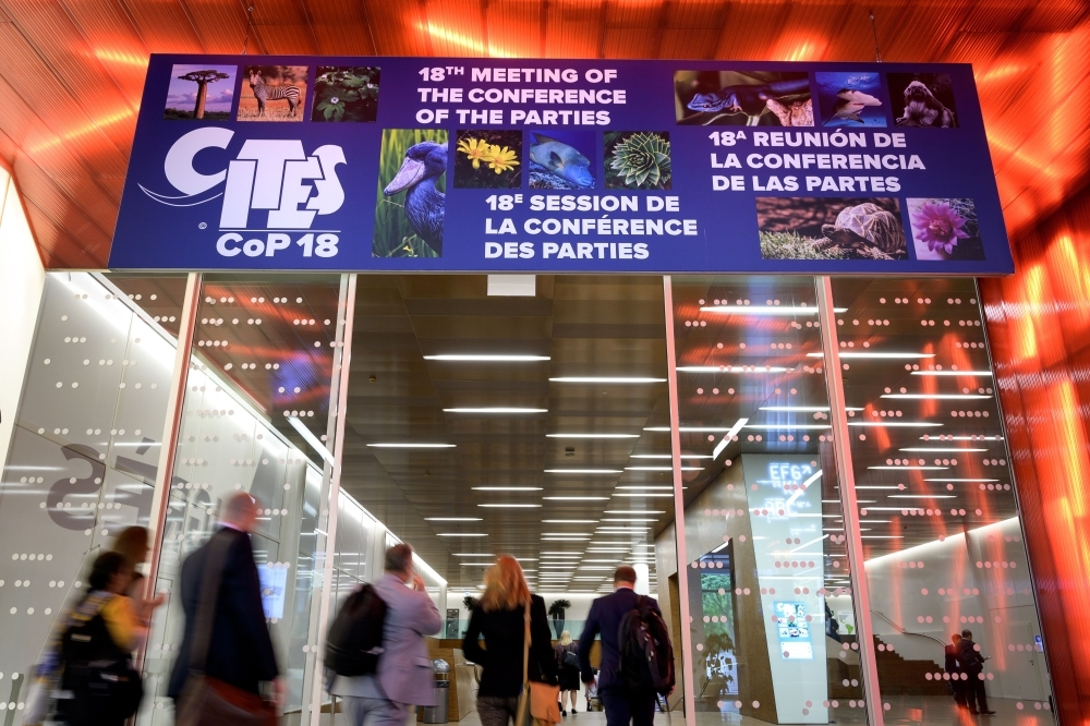 Delegates arrive to attend the United Nations's Convention on International Trade in Endangered Species (CITES) on Saturday at the opening day of the World Wildlife Conference – CITES CoP18, in Geneva. -AFP