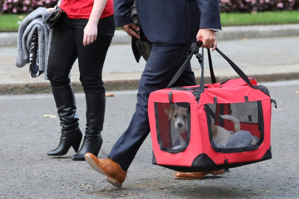 Britain's Prime Minister Boris Johnson and Carrie Symonds' new male Jack Russell puppy, a rescue dog, provided by Friends of Animals Wales, is seen being carried to 10 Downing Street in London on Monday. — AFP