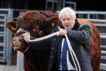 Britain's Prime Minister Boris Johnson tries to walk a bull during a visit to Darnford Farm in Banchory near Aberdeen in Scotland on Friday. Prime Minister Boris Johnson heads to Scotland on Friday in campaign mode despite failing to call an early election after MPs this week thwarted his hard-line Brexit strategy. — AFP