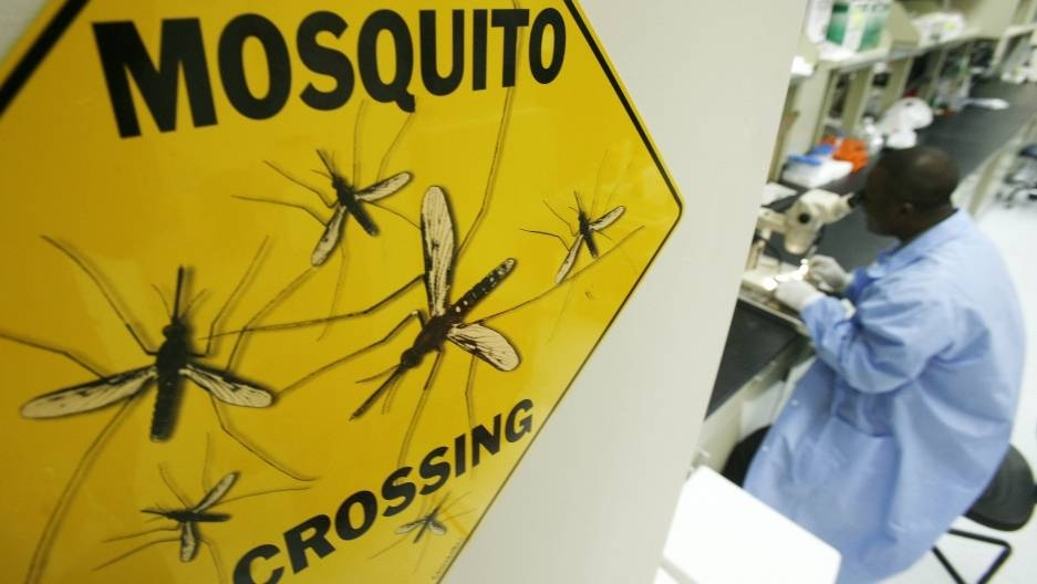 A scientist dissects a mosquito at a research facility in Rockville, Maryland. This week, scientists in Burkina Faso released some 1,000 genetically modified mosquitoes into the wild. -Reuters