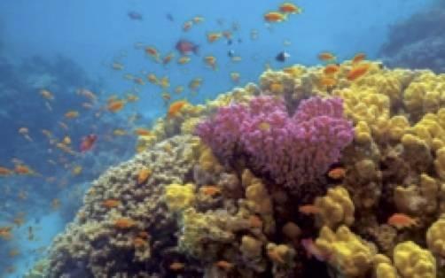 Colorful coral and rich marine life at AMAALA