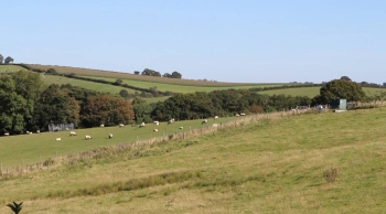 """Sheep graze at Rothamsted Research's """"Farm Lab"""" in North Wyke, Devon, England, on Sept. 13, 2019, in this screengrab taken from video. — Thomson Reuters Foundation"""