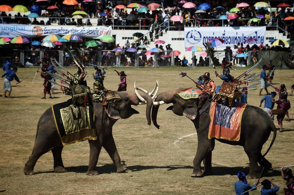 Elephants Battle