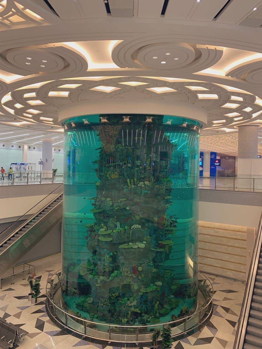 The over 2,000 fish in the airport aquarium include sharks, dogfish, Trevally, Triggerfish and Napoleon fish, which are fed automatically with fresh seafood and algae. — Courtesy photos