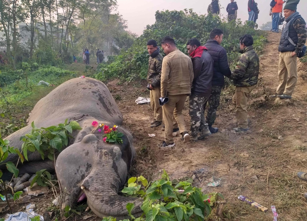 Indian villagers and forestry workers gather around the body an elephant after a speeding passenger train struck two elephants crossing the rail tracks at Batasi village near India-Nepal border, some 37 km from Siliguri, West Bengal, on Wednesday. — AFP