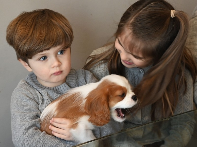 Three-year-old Johan (L), his sister Johanna and their new puppy Henry sit in the kitchen of their home in McLean, Virginia, Dec. 26, 2019. — AFP