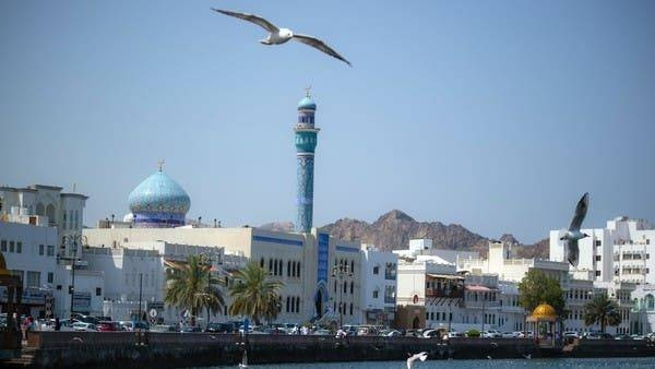 Gulls in Muscat, Oman. -- Courtesy photo
