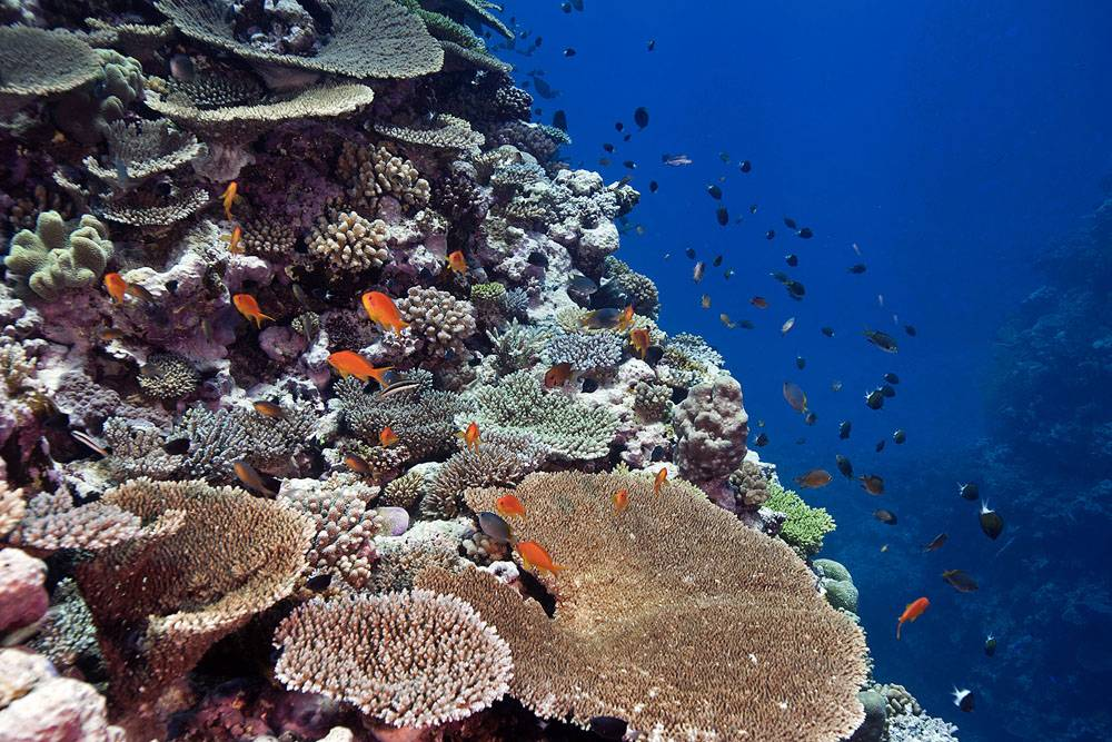 New Caledonia's coral reefs report offers a glimmer of hope for the future