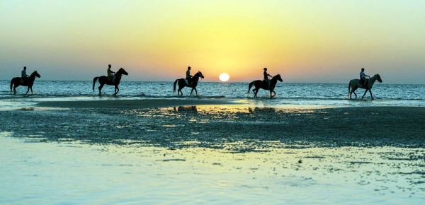 The performances of horsemen on the shores of Umluj governorate have caught the attention of the people and visitors.