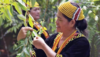 Indigenous communities in Malaysia have long been the guardians of the natural environment in the southeast Asian country. — courtesy Sarawak Biodiversity Centre