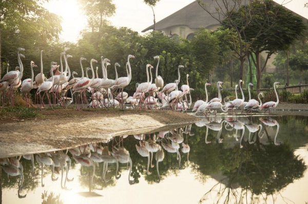 Dubai Municipality on Monday announced that the Dubai Safari Park will welcome visitors starting from Oct. 5, 2020, with a wide range of new interactive, educational, and entertainment experiences for visitors of all ages. — WAM photos