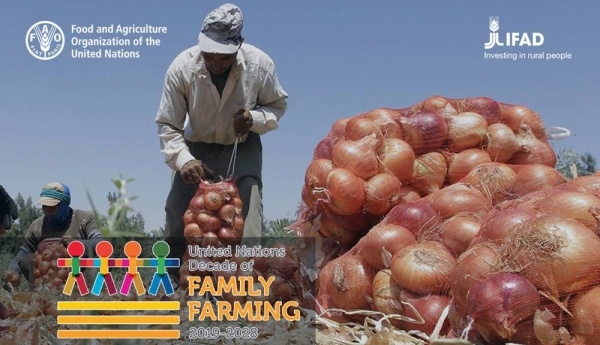 IFAD and FAO have joined forces to foster inclusive and sustainable family farming as the central cornerstone for a vibrant, productive and profitable agriculture across the Near East and North Africa (NENA).