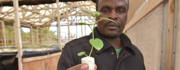 Rwandan entrepreneur Apollinaire Karegeya is growing potatoes without soil and with little water. — Courtesy photos