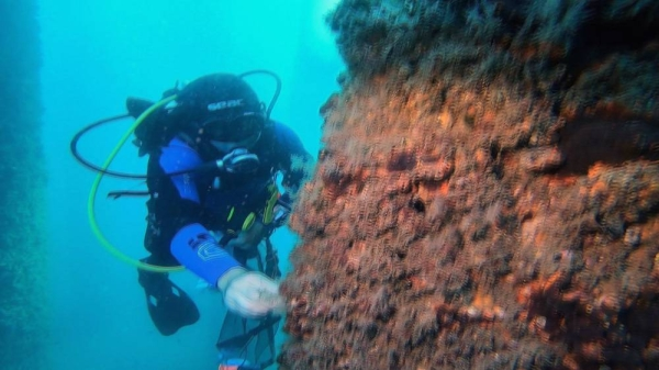 Posidonia Oceanica is an endangered seagrass species endemic to the Mediterranean Sea. — courtesy Euronews
