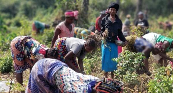 Women farmers in Sierra Leone are being encouraged to take on leadership roles in peacebuilding. — courtesy FAO/Momodu Deen Swarray