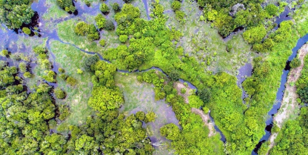 Peatland forests like this one in central Kalimantan, Indonesia, can store harmful carbon dioxide gasses. — courtesy CIFOR/Nanang Sujana
