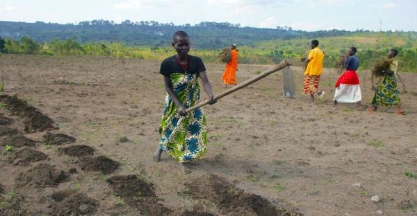 Women in Burundi tile the soil with hoes in preparation for planting. — courtesy FAO/Giulio Napolitano